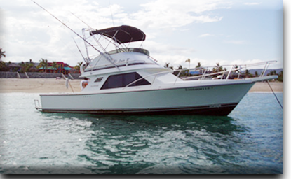 Bertram 31 ft Ursulas Fishing Fleet Cabo San Lucas